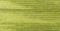 Baby Cashmerino Tonals - 04 Lime