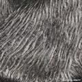 Japonica Beauty - 09 Stahlgrau